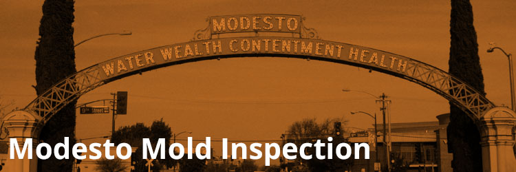 Modesto Mold Inspection and Remediation