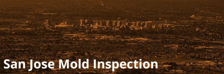 San Jose Mold Inspection and Remediation