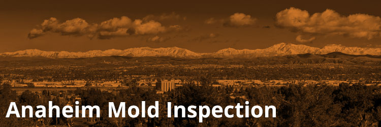 Anaheim Mold Inspection and Remediation