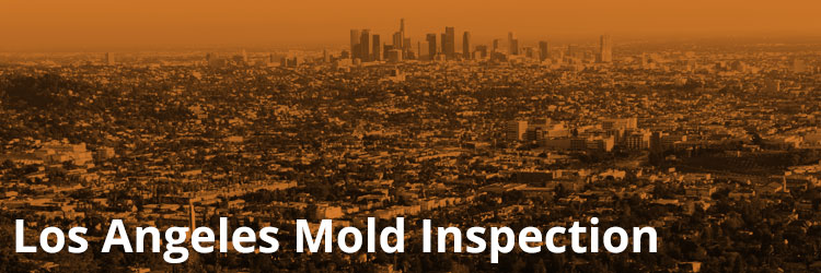 Los Angeles Mold Inspection and Remediation
