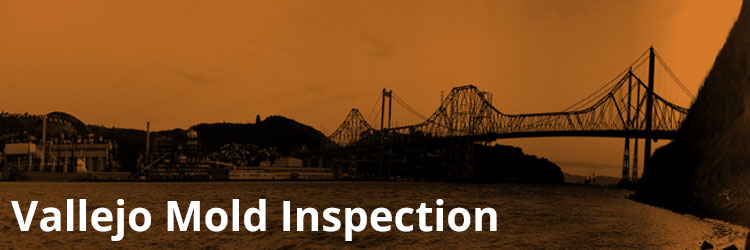 Vallejo Mold Inspection and Remediation