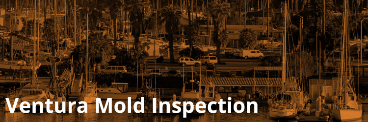 Ventura Mold Inspection and Remediation